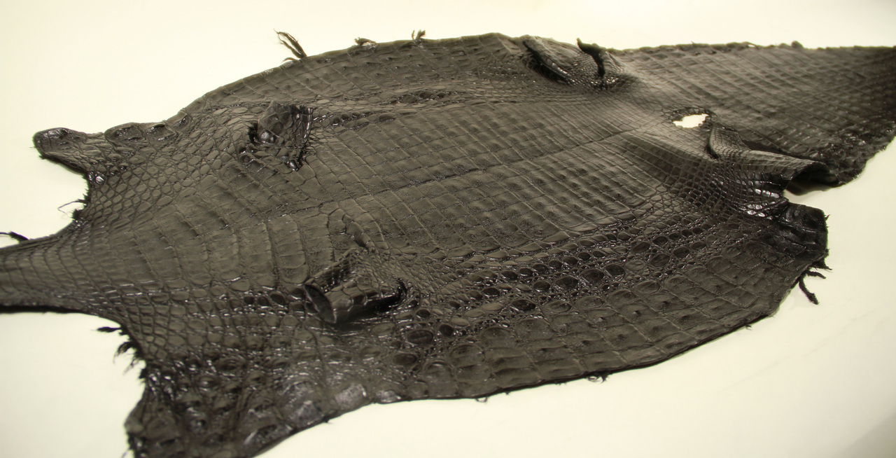 Genuine Caiman Crocodile Belly Skin - Matte Finish in Black (XL)