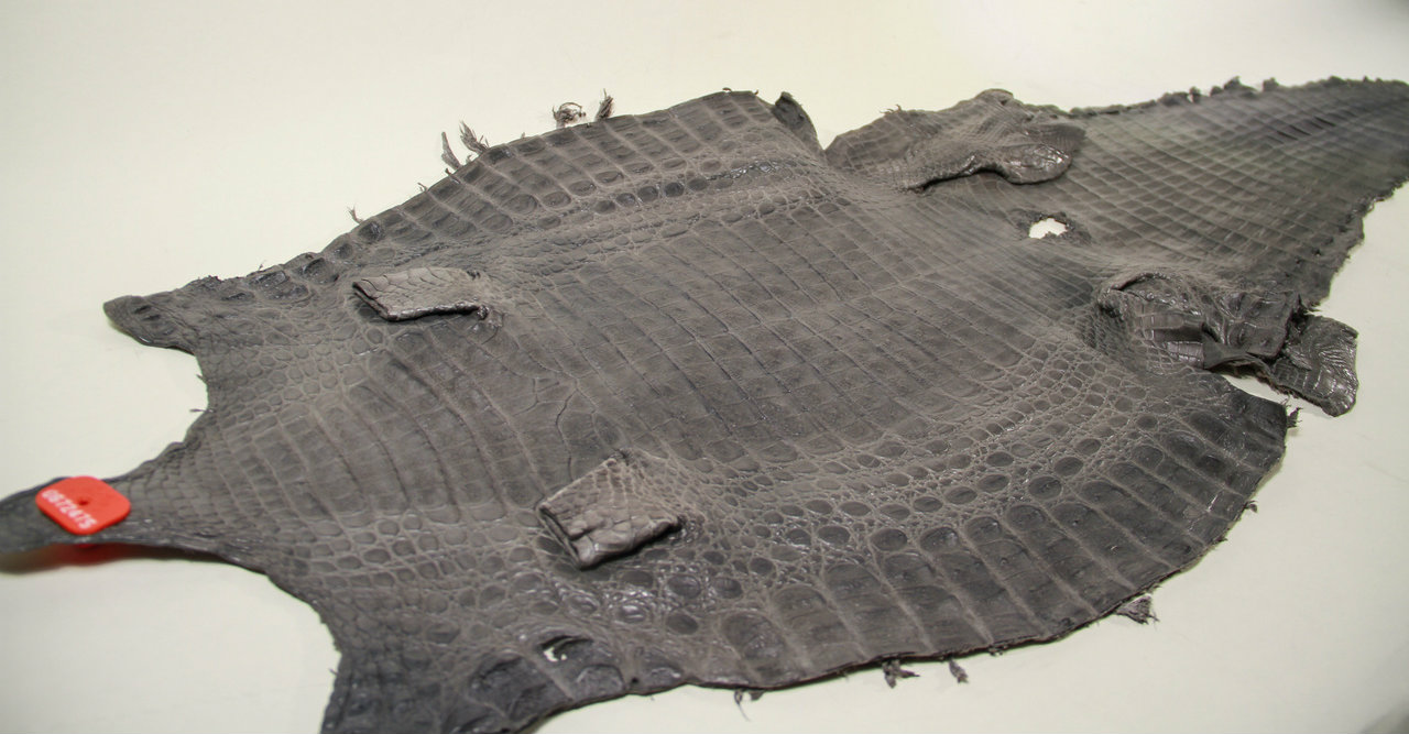 Genuine Caiman Crocodile Belly Skin - Matte Finish in Gray (XL)